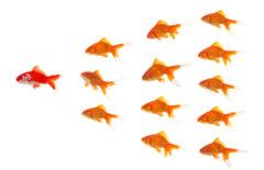 Seis maneras de liderar equipos empresariales